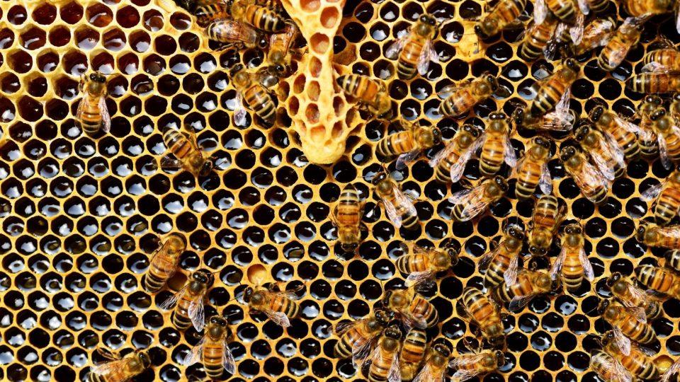 Las abejas, el presente y futuro del mundo