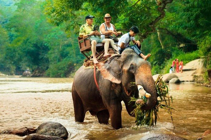 Paseo turístico a lomos de un elefante // AulaNews