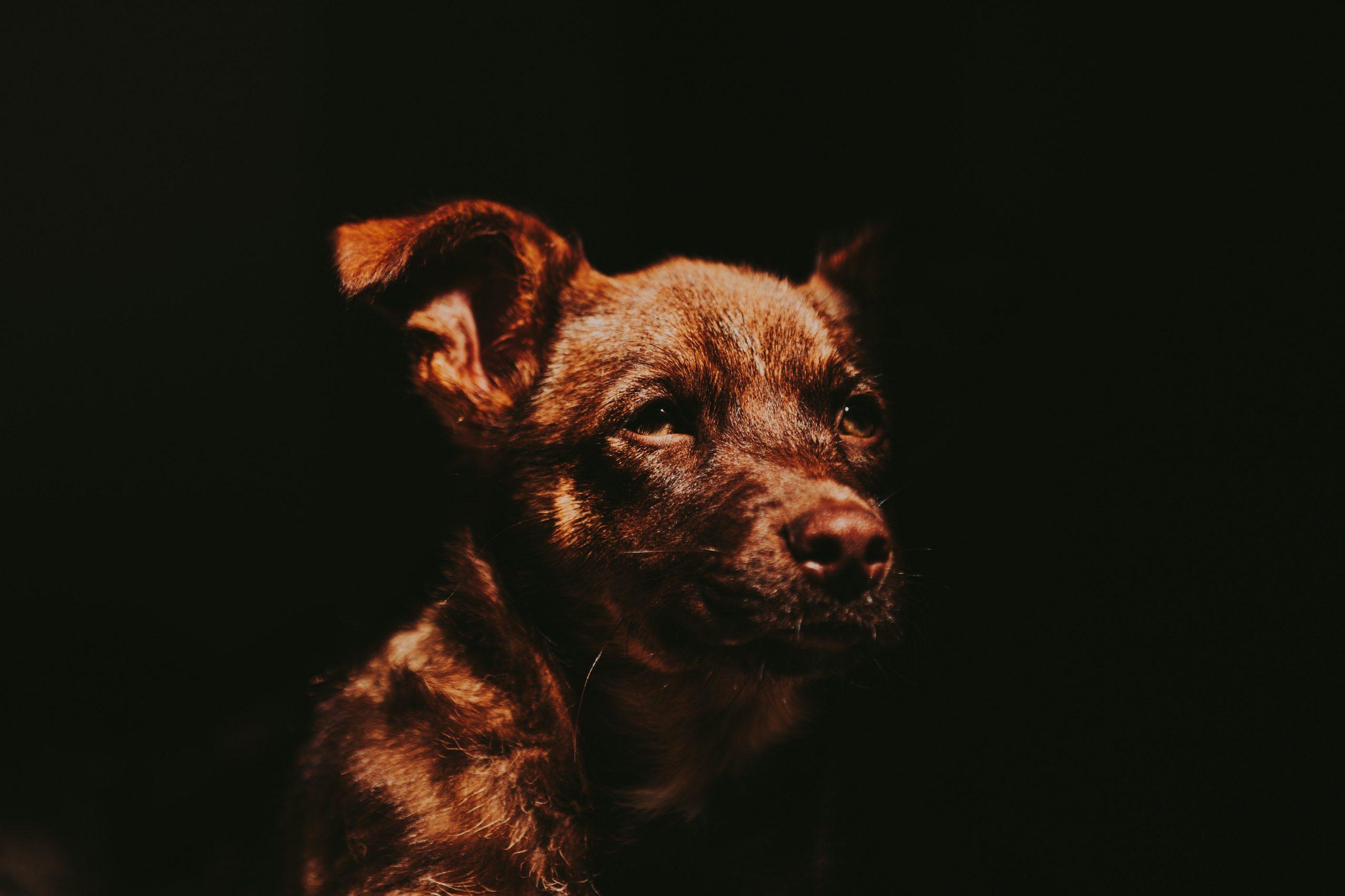 Un perro víctima del abandono