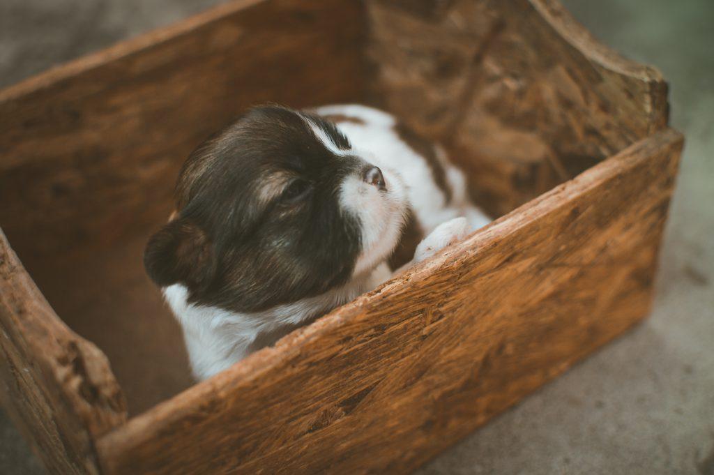 Un Perro en una cesta
