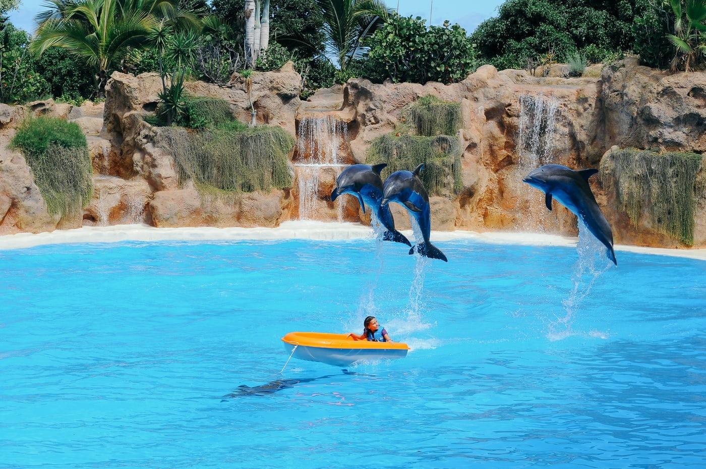 Delfines durante un espectáculo