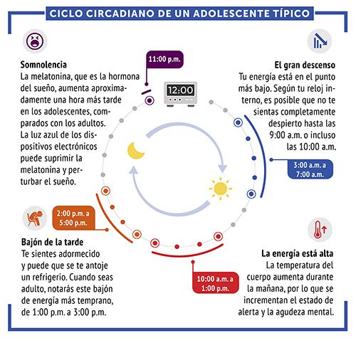 Ciclos circadianos en un ciclo de sueño normal