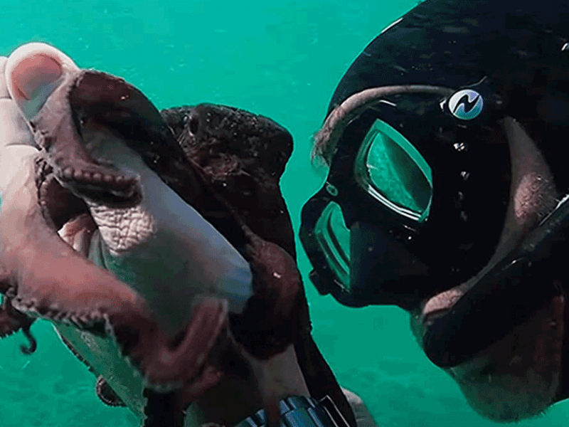 «My Octopus Teacher» wins the Bafta best documentary award