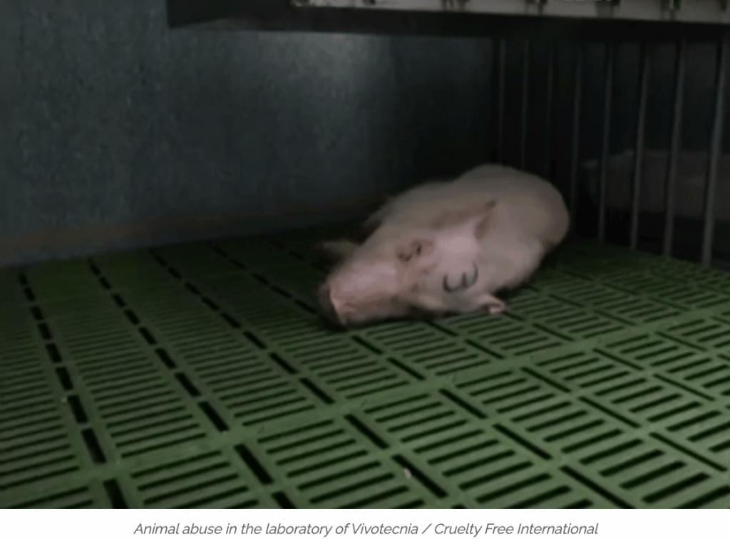 Vivotecnia animal abuse