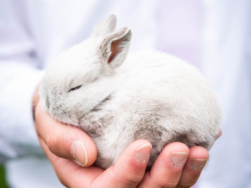 How to recognize a cruelty-free cosmetic product for sure?